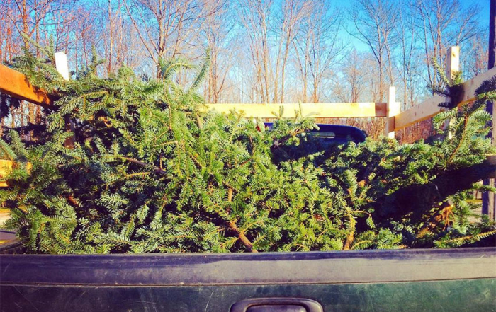 Balsam Bows In Truck